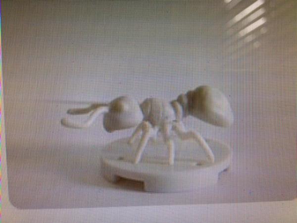 ant natural.JPG