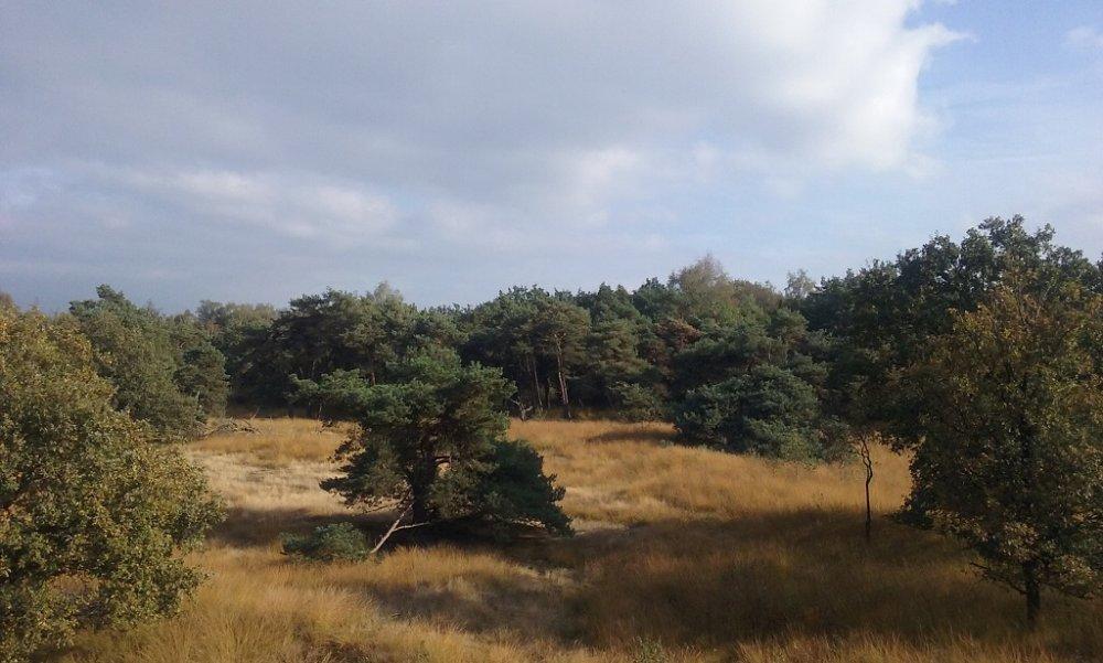 Heide.jpg
