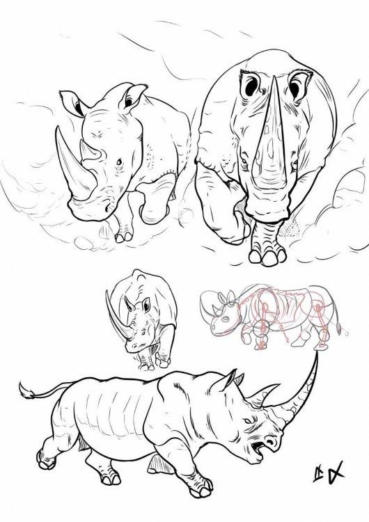 Rhino Stampede.jpg