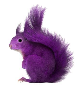 PurpleSquirrel2.jpg.28657f43fcc9730c349c003a988e1a30.jpg