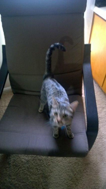 New Office 10 Cat 01.jpg