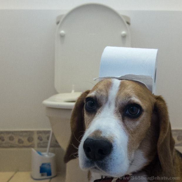 005db87d7f8def504ecfd0b0a58429ff--paper-hats-beagle-puppies.jpg