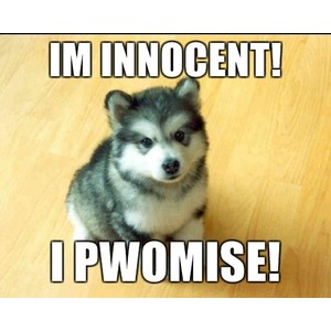 innocent wolf.jpg