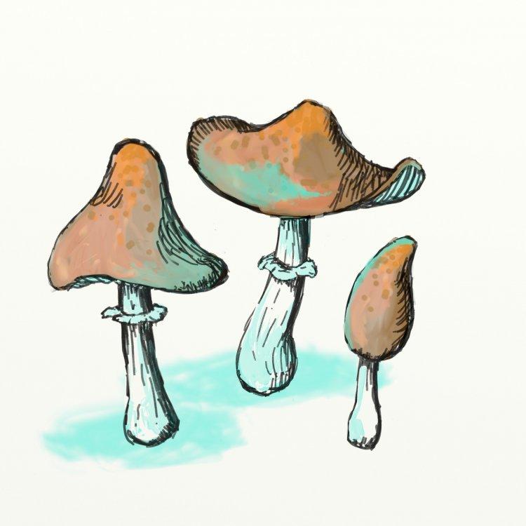 Shrooms_001.thumb.jpg.6e7f6954f0a6374a01a7ca56ff916199.jpg