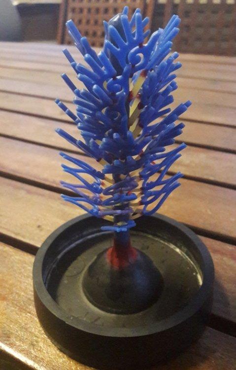 tree1.thumb.jpeg.a06671754735e1acc88a5edaec86b41a.jpeg