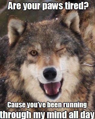 Wolf flirt.jpg