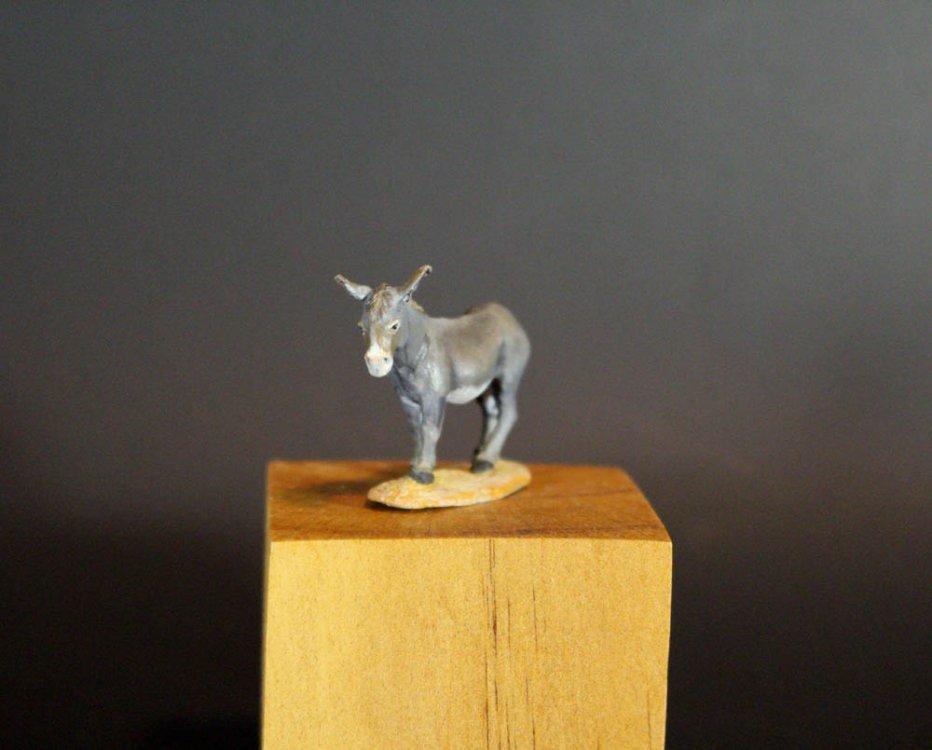 Donkey1M.jpg