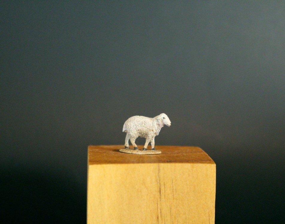 Sheep1M.jpg