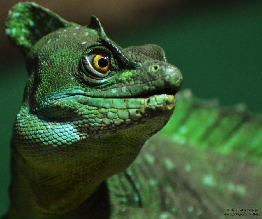 basilisk_lizard_by_michael__fitzsimmons-d67g8ua.thumb.jpg.017397e972cf912496a90a2a320ac117.jpg