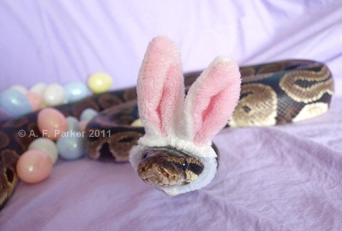 cute-snakes-wear-hats-110__700.jpg