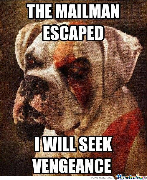 kratos-the-dog_o_1592591.jpg