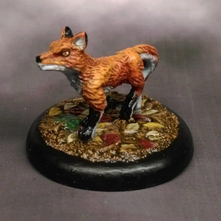 stonehaven-fox-02.thumb.jpg.02f0ed171fa3e4b0efc4d7646dc9e5ce.jpg