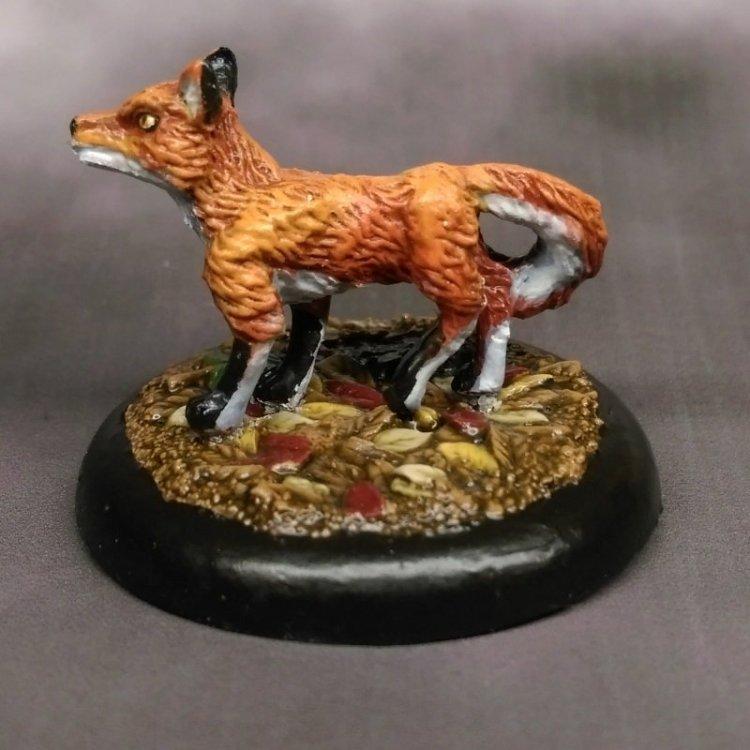 stonehaven-fox-03.thumb.jpg.512bef71a90152bb81b286a9dc61c0ab.jpg