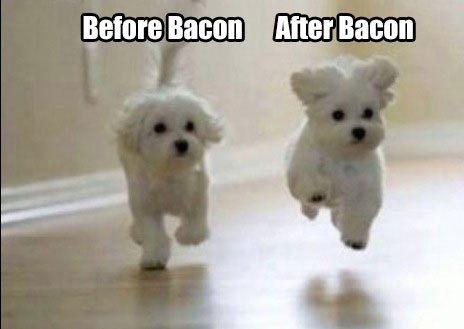 before-after-Bacon-Dogs-meme.jpg