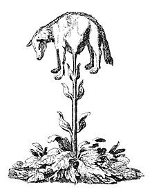 1341634193_220px-Vegetable_lamb_(Lee_1887).jpg.3622760f44a44105545e4158921c7072.jpg