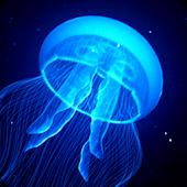 CorallineAlgae