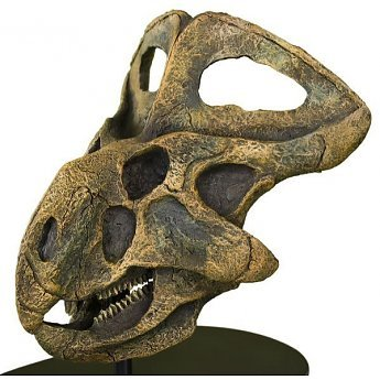 protoceratops-skull-model.jpg.7450879fa4bac7ac2caaad138b1c6bc8.jpg