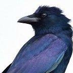 bluecrowlaura