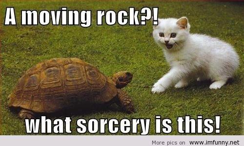 Most-funny-animal-memes-and-humor-pics-54.jpeg.c7d91a5fa9ce9e723bef692242118bb4.jpeg