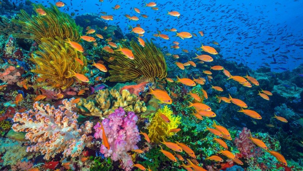 korallenriff-mit-fischen-100~_v-gseagaleriexl.jpg