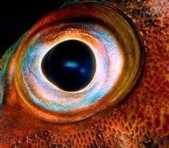 Eye1.jpg.459e964ce9162ca3e831b415c7657ada.jpg