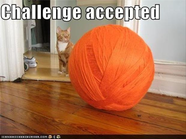 a-challenge-accepted-cat-with-giant-ball-of-yarn.jpg.533aa34d692cf052404c7e09f20a27de.jpg