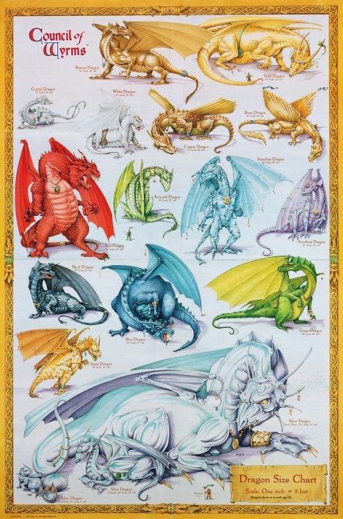 Dragon_Size_Chart.jpg