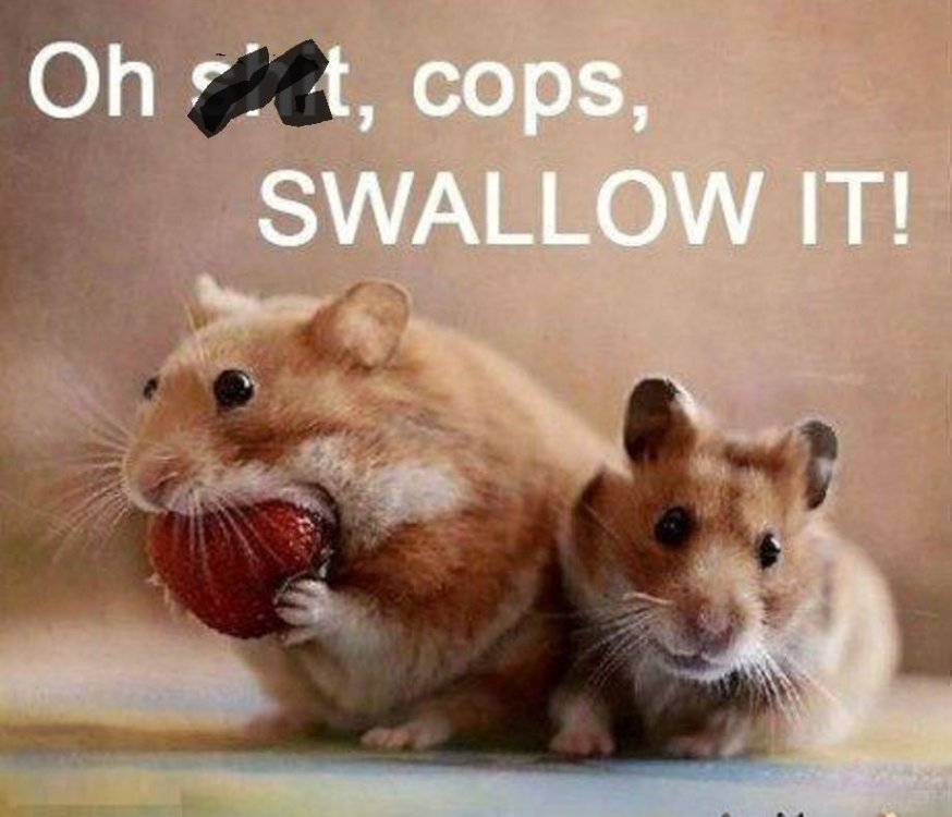 your-hamster-is-a-criminal-and-you-re-his-accomplice_o_549675.jpg