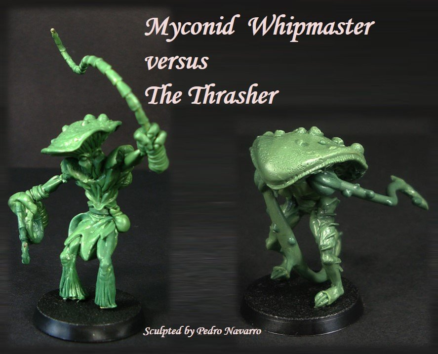 Whipmaster_vs_Thrasher.jpg