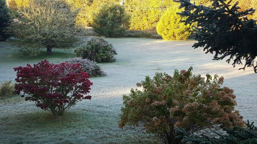 frost.thumb.jpg.f5a82322deb6313de4c417a848f72b12.jpg