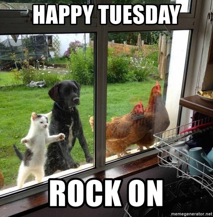 happy-tuesday-rock-on.thumb.jpg.05623a0cb26426fc27c904cfa07d7b8c.jpg