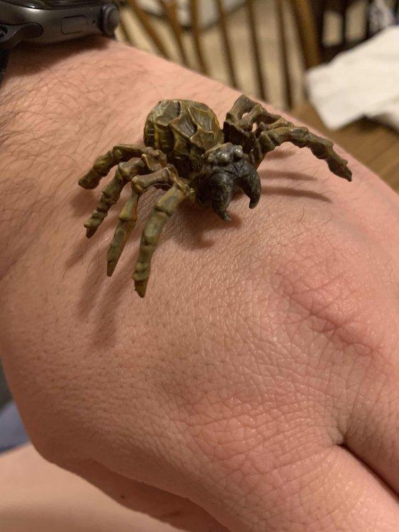 109025301_Spider1.thumb.jpg.43ce4390b865754c49e00a6b84114159.jpg