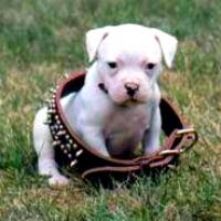 Cranky Dog