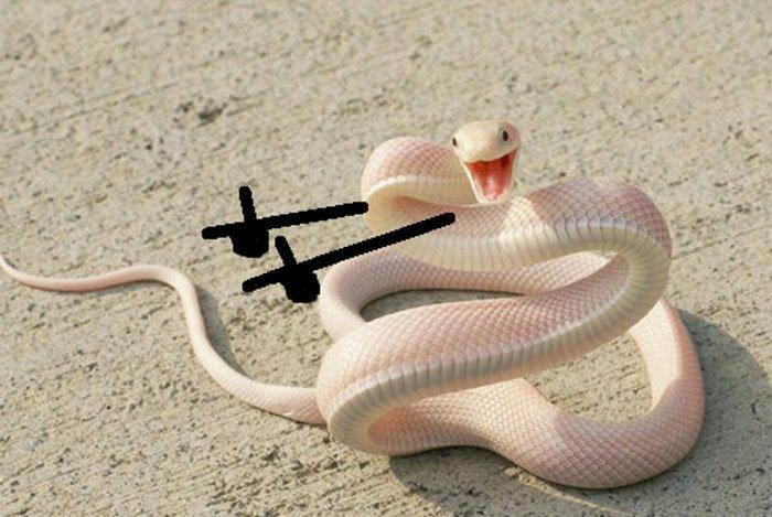 1708672276_funny-snakes-arms-doodle-82-5d8221e0336af__700(1).jpg.8ae1e78671d63c4f873759f890231e51.jpg