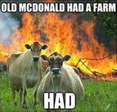 bovine-old-mcdonald-hada-farm-had.jpeg.18b09a00df10cc046ca81c58c0f1f025.jpeg