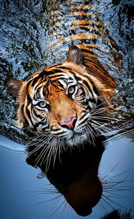 Top-10-Photos-of-Big-Cats-01.thumb.jpg.521120a6ecc6b9b38292f0164e1d8d2f.jpg