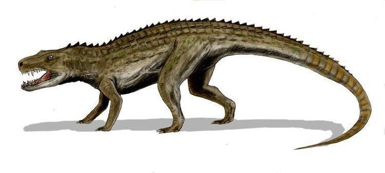 postosuchus-39614b08-0428-42f4-9bdc-ccee76c8091-resize-750.jpg