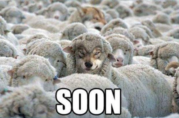soon-wolf-with-sheep.jpg