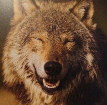 949e1b4b173bfb538457a3287f46fbf4--happy-animals-wild-animals.jpg