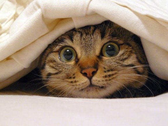 Cat-Hiding-Under-Blanket.jpg.bb27145fc7ae852fe6a12586274fb7fd.jpg