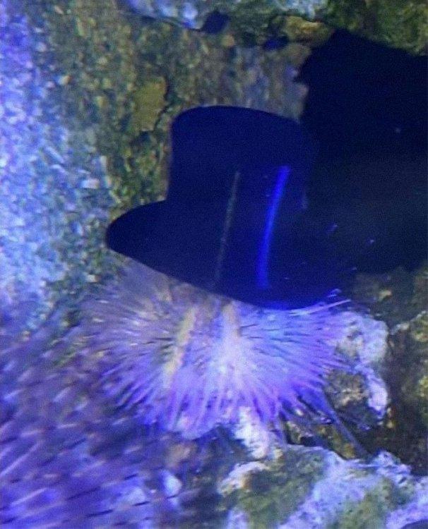 sea-urchins-tiny-hats-4-5fbba96da9c2e__700.thumb.jpg.dc86e1b9bc7b352d505e2ddd1f77f920.jpg