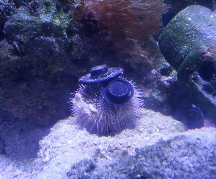 sea-urchins-tiny-hats-9-5fbba97871e0d__700.jpg.7dfad414626be644a77c10399c827153.jpg