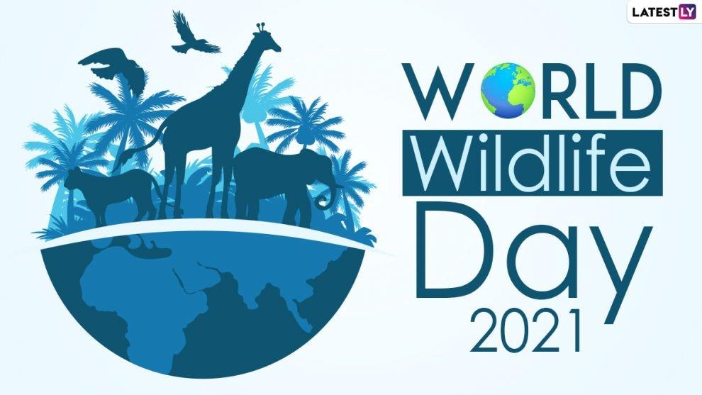 World-Wildlife-Day-2021-From-David-Attenboroughs-A-Life-on-990x557.jpg.6de6ef424dbbc2828a309933328904e8.jpg