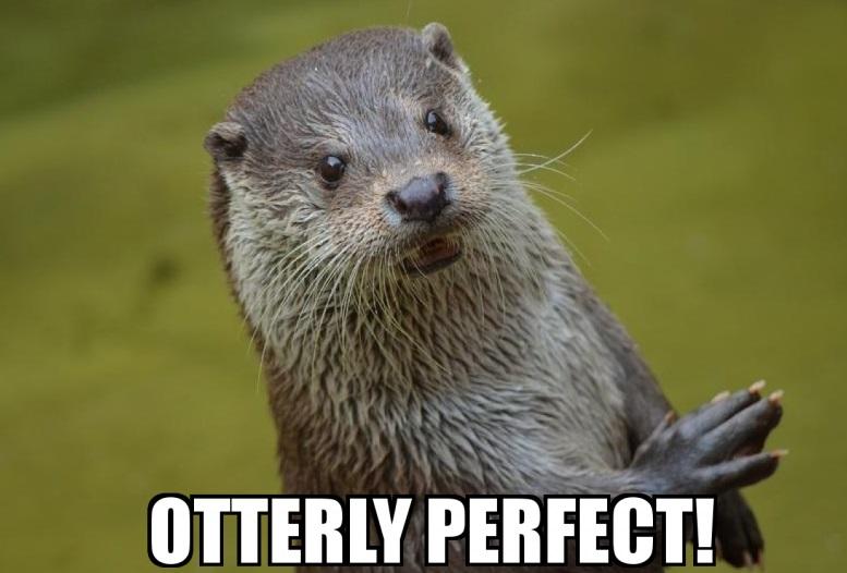 otterly-perfect.jpg
