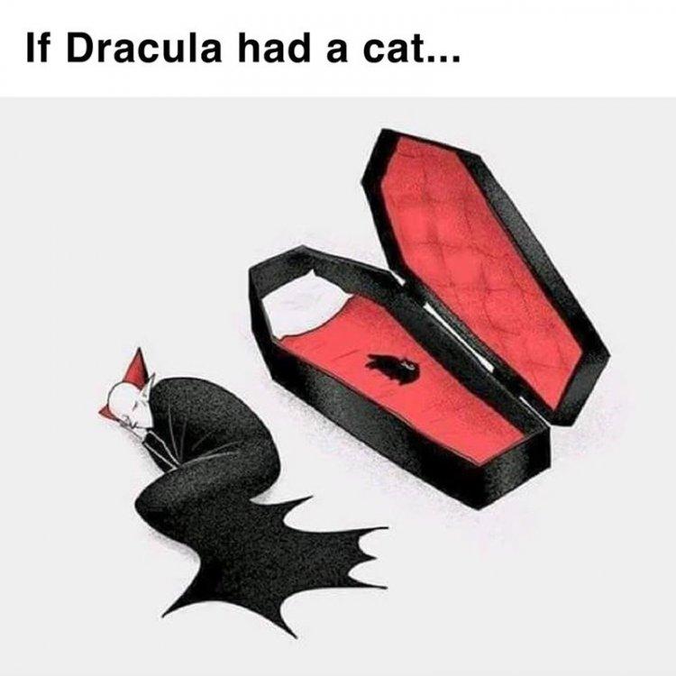 if-dracula-had-a-cat.thumb.jpg.c40c1ea7500f566df429e237e386501a.jpg