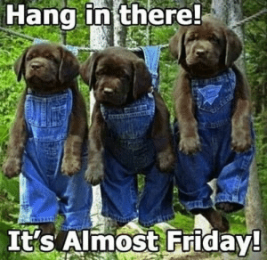 thumb_hang-in-there-its-almost-friday-thursday-animal-meme-images-50623577.png.d6e529528a3701e630377be5470d0c2a.png