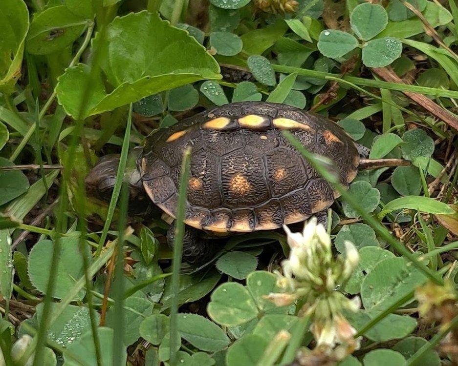 turtle.thumb.jpg.7368125c8e4fca2ef1b7356c2dac0106.jpg