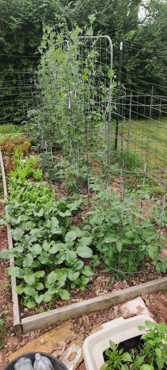 Tomatoes2.thumb.jpg.5853f5f4c6d1ef8f894b25158123b57a.jpg