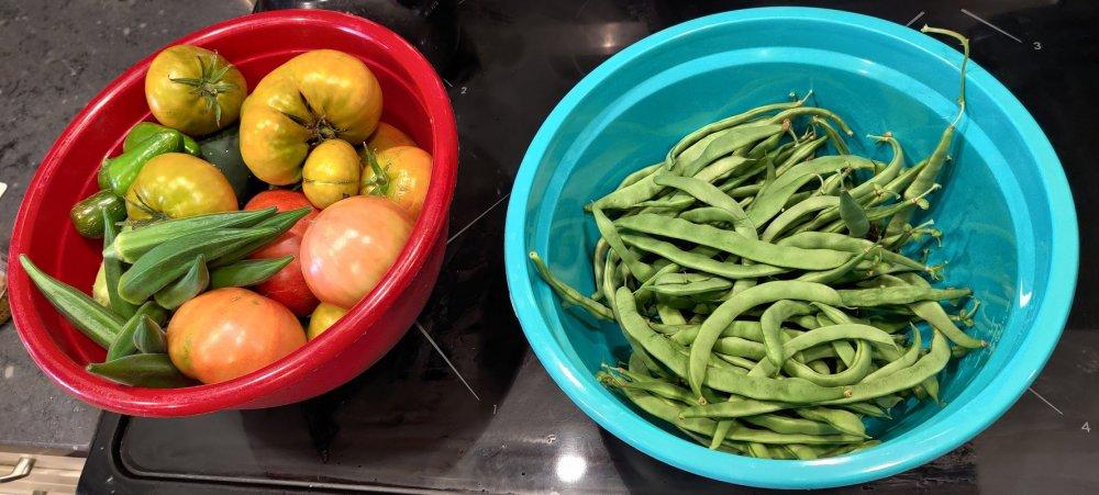 758414965_Tomatoesbeans.thumb.jpg.4a207e8937bda3b87391069bd4207c79.jpg