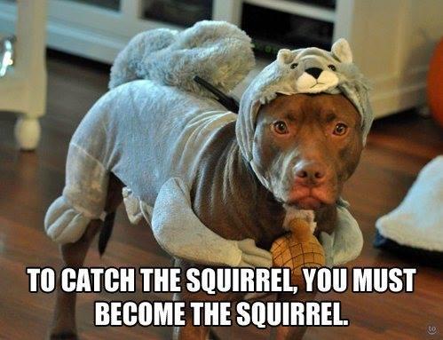 squirrel.jpeg.4470a609d668fe906b0751cc939c0e51.jpeg